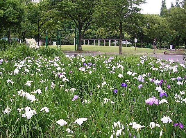 DSCN1977神宮東公園