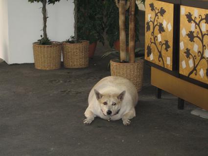 ソーセージ犬