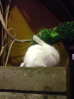ウサギのまね