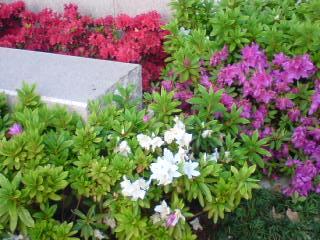 花の三原色