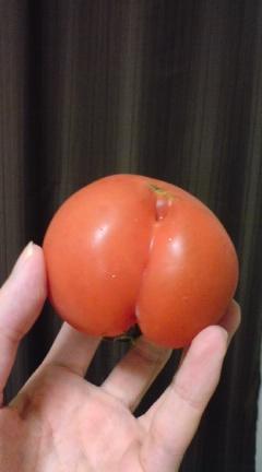 シリトマト