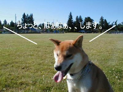 sanpo1.jpg