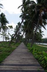 Trivandrum海近く2