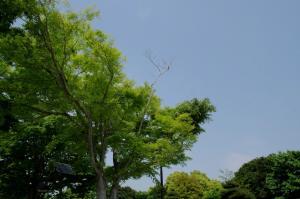 葛西新緑2