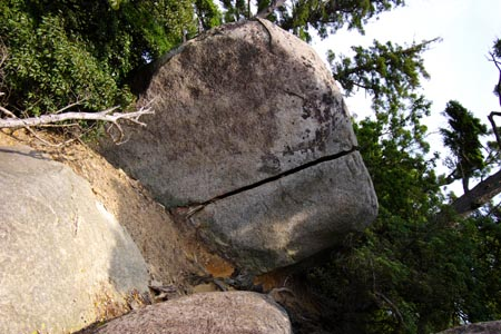 木の根に割られた岩
