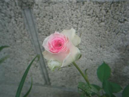 20060914145729.jpg