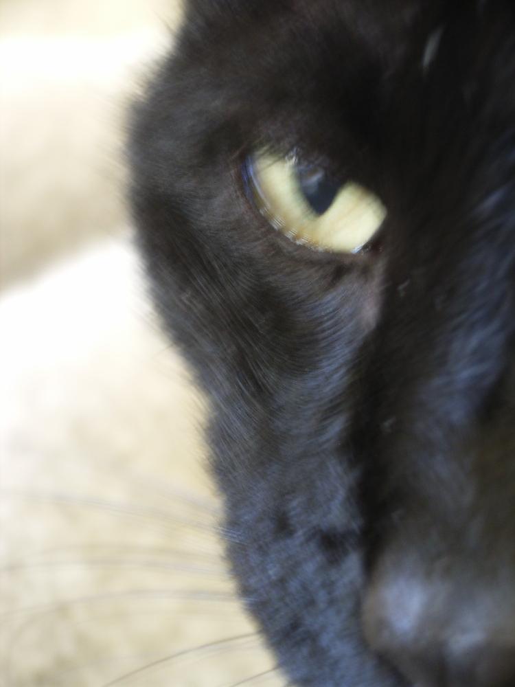 シトロンの瞳