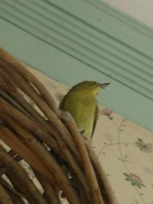 green_bird1