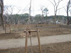 3.31芦野公園 整備1