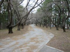 3.31芦野公園 歩