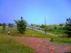 s-b2008-6.28大沼公園1