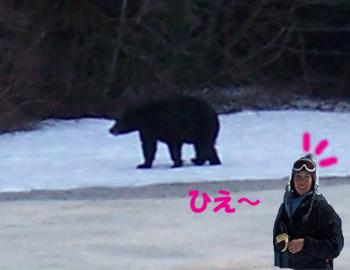 4月27日熊のコピー