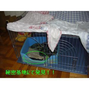 CIMG0392_small_20080415225059.jpg