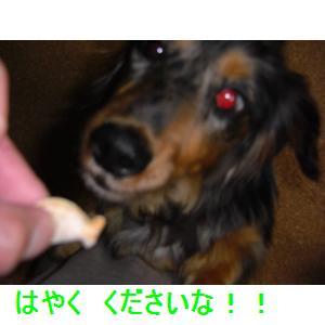 CIMG0659_small.jpg