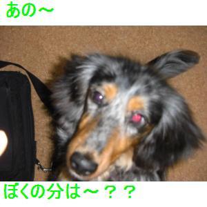 CIMG0662_small.jpg