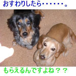CIMG0664_small.jpg