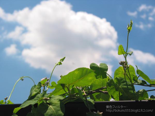 IMG_4141blog.jpg