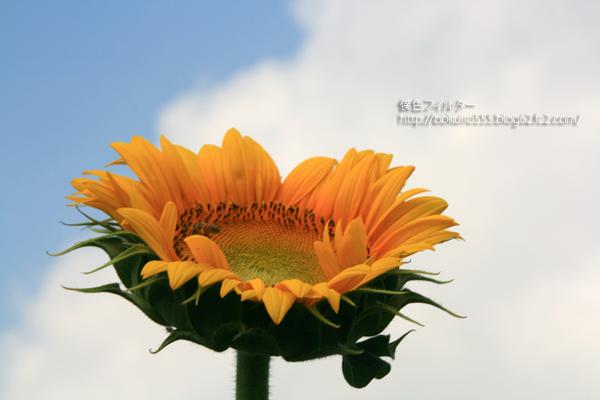 IMG_6127blog.jpg