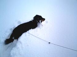 snow-bond02.jpg