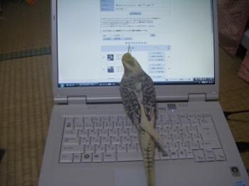 パソコンとブー