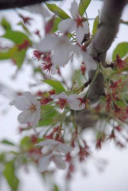 2008-04-12_17-30-37.jpg