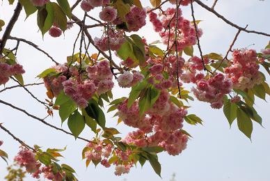 2008-04-27_15-05-53.jpg