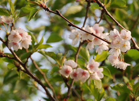 2008-04-27_16-06-32.jpg