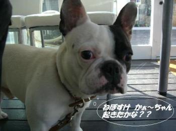 2008 2 10  モーニング 004☆