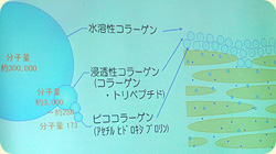 3種のコラーゲンがコラーゲンを補う