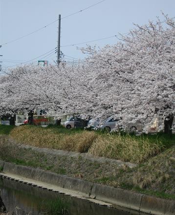 200804091お花見