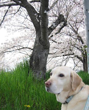 200804093お花見