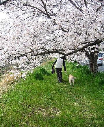 200804094お花見