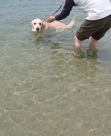 200805114初泳ぎ