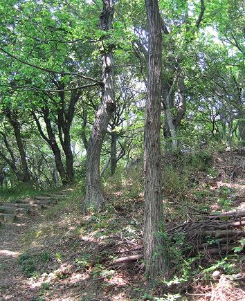 200805183森林浴