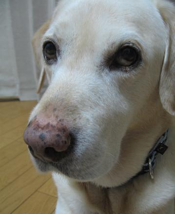 200805281探査犬