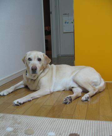 200805283探査犬