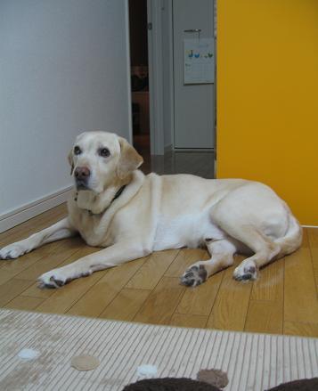 200805284探査犬