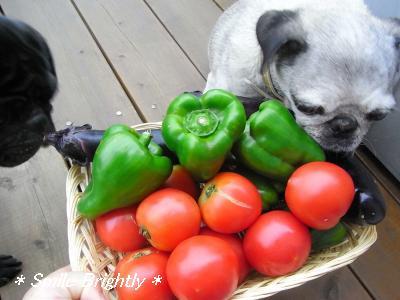 080807野菜♪