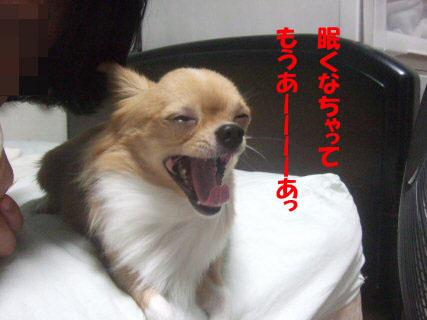 c42-4.jpg
