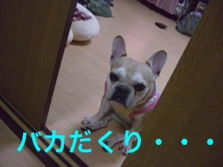 CIMG4336.jpg