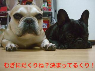 CIMG4607_1.jpg