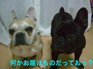 CIMG4609_1.jpg