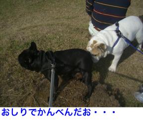 CIMG5572.jpg