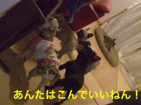 CIMG5669.jpg