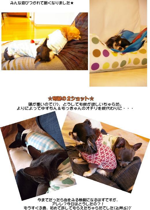 5_20080412035442.jpg