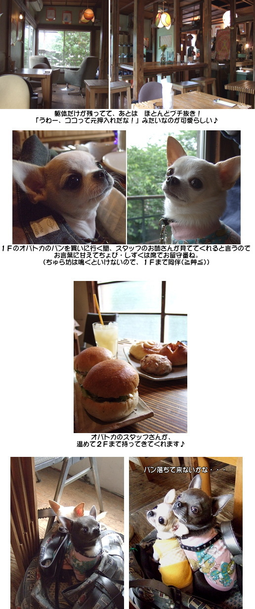 5_20080601044243.jpg
