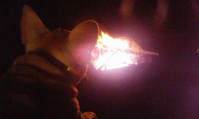 なんや知らんけど、火ってエエなぁ。。
