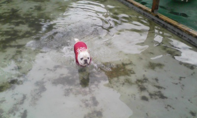 なんやねん、これ、水の中におるで、オレ!