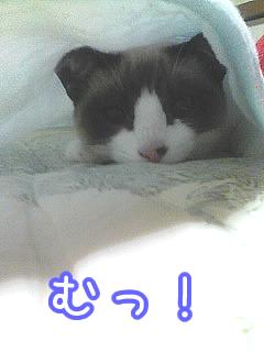 20080422-1.jpg