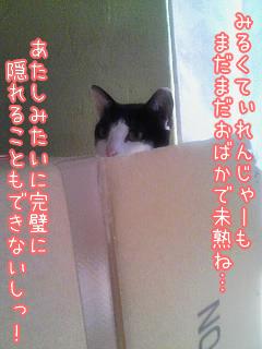 20080422-6.jpg